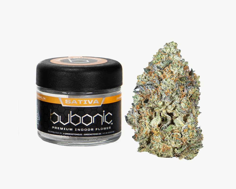 La Pop Rockz Sativa Strain by Bubonic  | Splitbud Deals