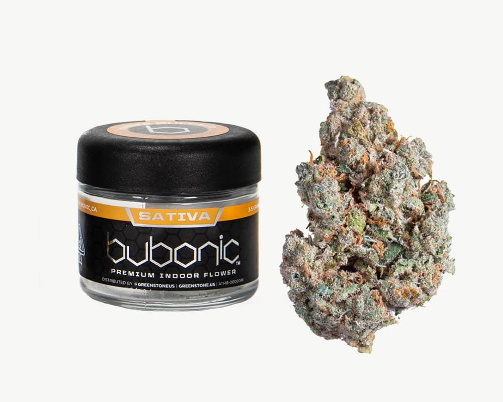 Jack Herer Sativa Strain by Bubonic  | Splitbud Deals